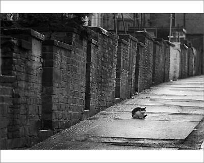"10""x8"" (25x20cm) Print Black and white cat in backstreet, Bradfor..."