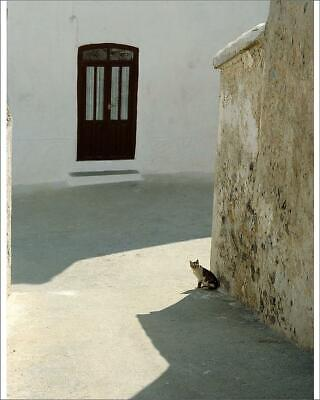 "10""x8"" (25x20cm) Print of Cat in hot street, Almaria, Spain from"