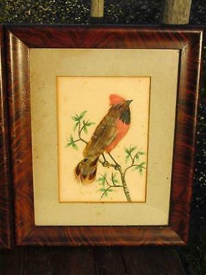 1917 WW1 ERA WATERCOLOUR PAINTINGS-BIRD FEATHERS-Sgnd.ENGINEER S.S.PORT HARDY