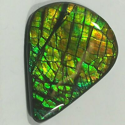 Rare Canadian Ammolite, Free Form Guitar Pick, Loose Gemstone, Bright Gold/Green