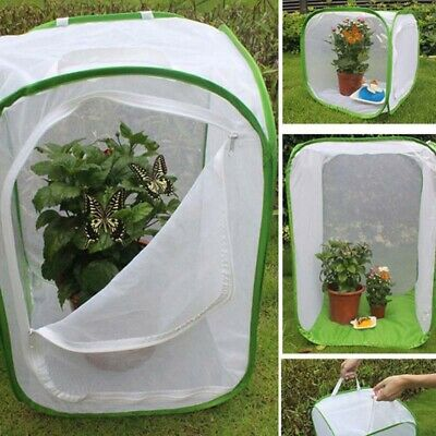 Praying Mantis Stick Insect Cage Butterfly Chameleon Foldable Housing Enclosure