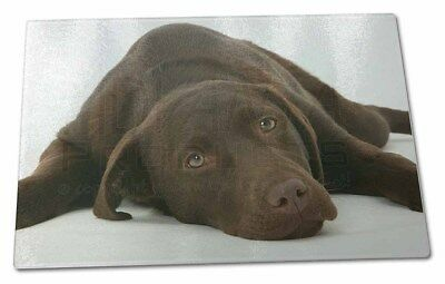 Chocolate Labrador Dog Large Glass Cutting Chopping Board, AD-L54GCBL