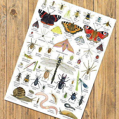 British Invertebrates Identification Chart A4 Bugs Insects Card Poster Art Print