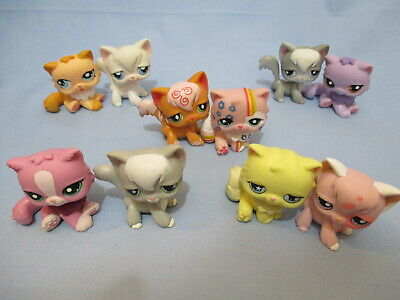 Littlest Pet Shop Lot 2 Random Angora Persian Cat Authentic LPS and Gift Bag RB