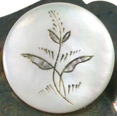 Large Old Engraved Pearl Button, Stylized Flower