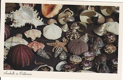 Seashells in California  Unposted