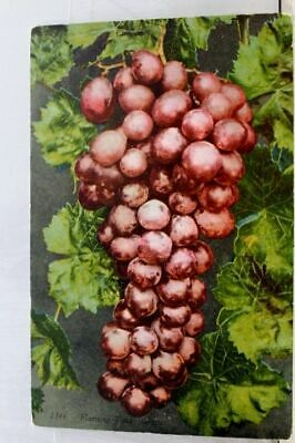 Scenic Flaming Grapes Postcard Old Vintage Card View Standard Souvenir Postal PC