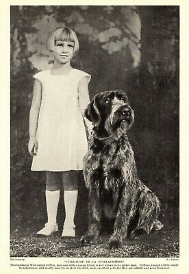 1930s Antique Wirehaired Pointing Griffon Print Guillaume Guillaumiere 3416-Q