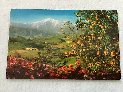 Winter in Southern California,  Vintage 1960 Postcard