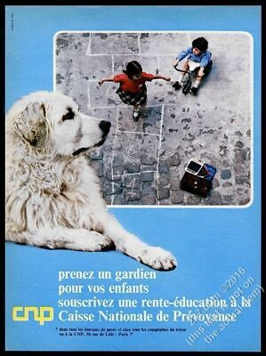 1967 Great Pyrenees dog color photo CNP French vintage print ad