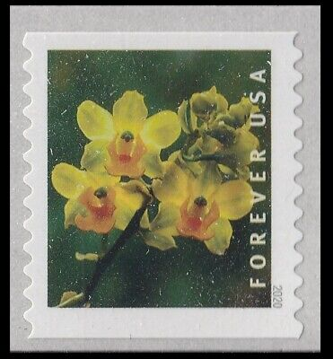 US Wild Orchids Cyrtopodium polyphyllum forever coil single MNH 2020
