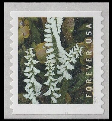 US Wild Orchids Spiranthes odorata forever coil single MNH 2020