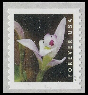 US Wild Orchids Triphora trianthophora forever coil single MNH 2020