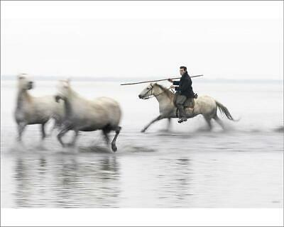 "10""x8"" (25x20cm) Print A guardian herds two white horses through..."