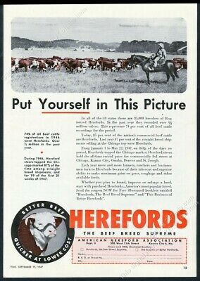 1947 hereford cattle herd cowboy horse photo American Hereford Assn print ad