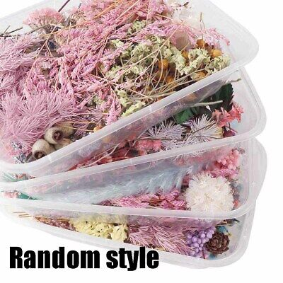 1Box Assroetd Real Dried Flowers Pressed Leaves for Epoxy Resin Jewelry Making