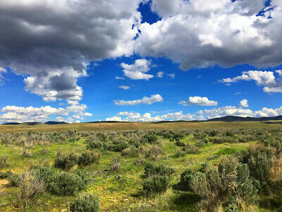 Rare 40 Acre Nevada Ranch! Ez Access~2Wd Road~Surveyed! Cash Sale! No Reserve!