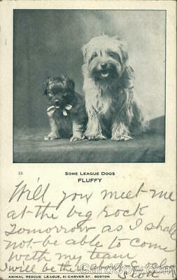 Some League Dogs,Fluffy Animal Rescue League Antique Postcard Vintage Post Card