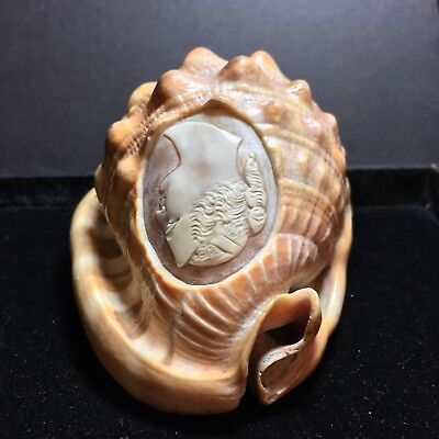 Antique Carved Cameo Sea Shell