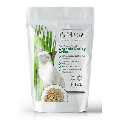 Ready Grown Cat Grass (3 pots)+ barley seed pouch