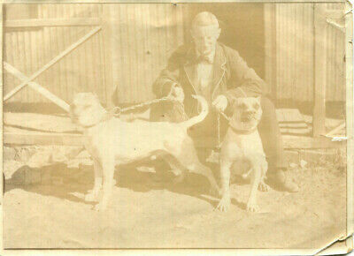 1920s photograph Man in bow tie with pair of bulldogs on chain leads