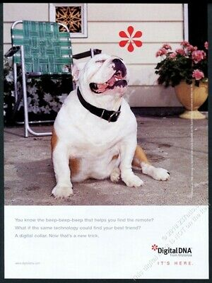 1998 happy bulldog photo Motorola DigitalDNA vintage print ad