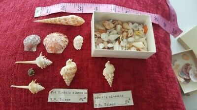Multiple Sea Shells and Shark Teeth From 40 Year Old Collection