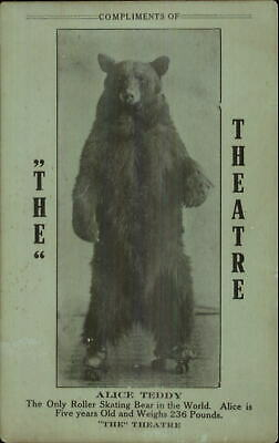 Only Roller Skating Bear in the World Alice Teddy Theatre Card Postcard Size