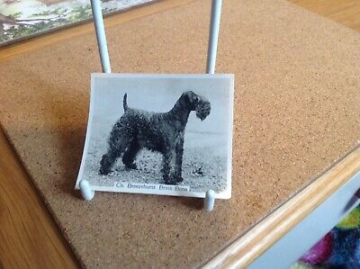 Kerry Blue Terrier Dog Show Ring Clip by Curiosity Crafts