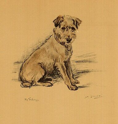 1937 Antique Border Terrier Print Vintage Lucy Dawson Border Terrier Art 4093t