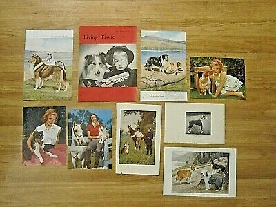 14 vintage Collie dog calendar prints/magazine covers-1913-1959-framable