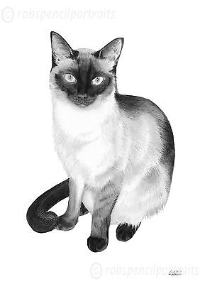 SIAMESE CAT A4 Print Rare Gift Present For Siamese Cat Lover Collector