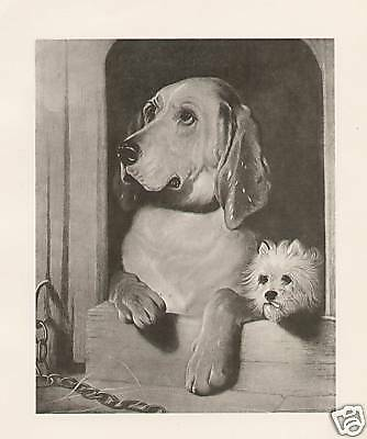 Bloodhound and West Highland Terrier Room Mates 1893 Antique Art Print
