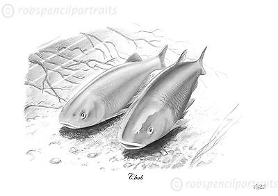 CHUB Chevin Chavender Limited Edition Pencil Drawing Art Print Fishing Picture