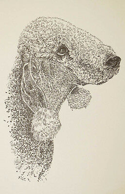 Bedlington Terrier Dog Art Lithograph #30 Kline will add your dogs name free.