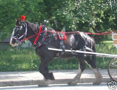 Frontier Special Amish made biothane or beta standardsize horse harness