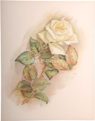 'White Rose' 1909 Victorian Color Litho 10x13 Print - Chromolithograph