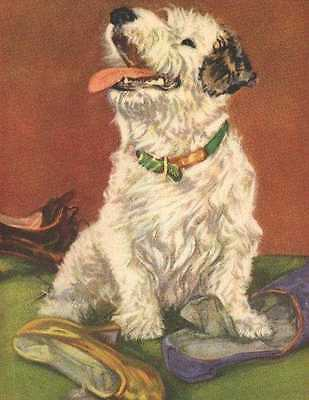 Sealyham Terrier - Dog Print - Diana Thorne
