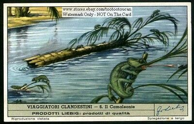 Lizards: The Chameleon - NICE c50 Y/O Card
