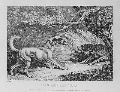 OLD PRINT ANTIQUE ENGRAVING DOG & WOLF by HOWITT 19th C c1810