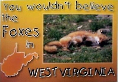 You Wouldn't Believe all the HOT Foxes in WV Postcard