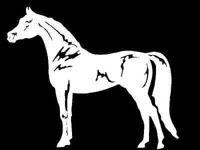 Arabian Horse Decal equestrian trailer vinyl car truck window sticker graphic