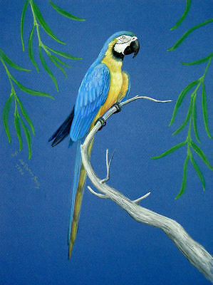 Original Pastel Drawing Blue & Gold Macaw Parrot Bird Wildlife Art Porter Family