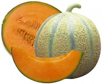 Vegetable  Melon Cantaloupe Di Charentais  175 Finest Seeds