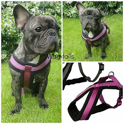 """Trixie Purple Soft Padded Fabric Dog Harness All Sizes """"Berry"""""""