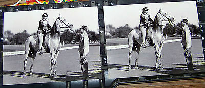 2 Postcards Greyhound, Famous Standardbred Trotter Gelding with Rider Horse Race