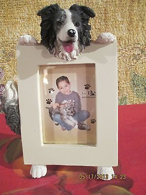 Border Collie ~ Picture Frame #5
