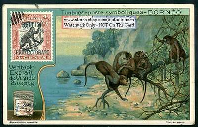 Stamps Of Borneo Pacific Ocean Asia: NICE c1920 Card