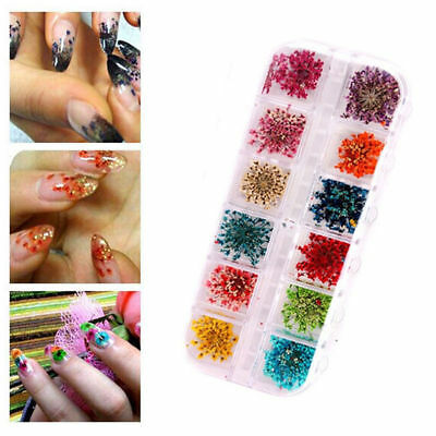 3D Decoration Real Dry Dried Flower for UV Gel Acrylic Nail Art Tips 12 Colors