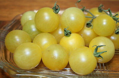 Organic Vegetable Tomato White Cherry 100 Finest Seeds